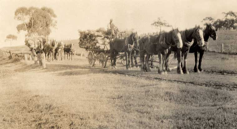 Two horse-teams carting wood from Paris Creek to Bugle Ranges